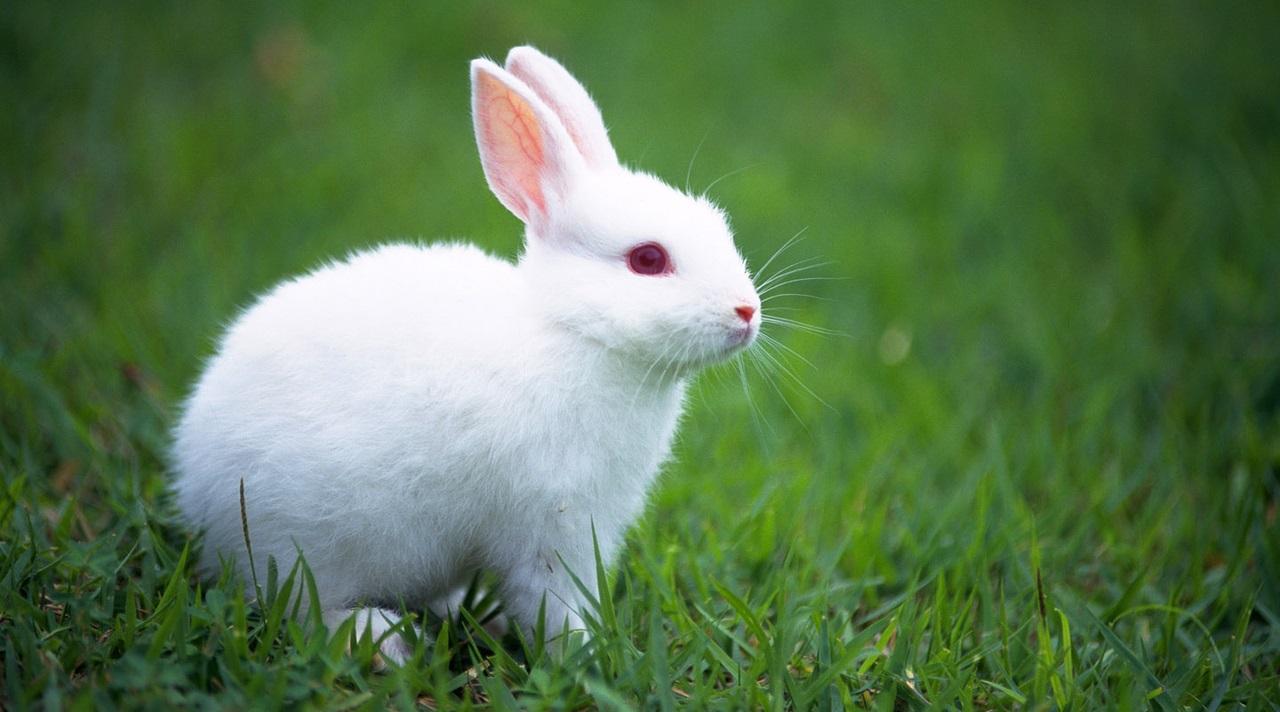 Ευρωπαϊκή νομοθεσία για τα πειράματα σε ζώα