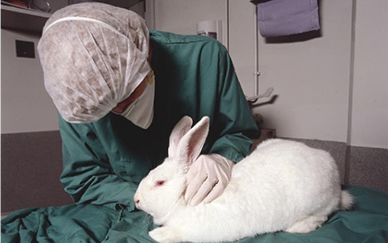 Australia bans animal testing photo